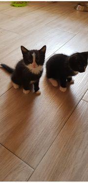 Katzen suchen neues Zuhause