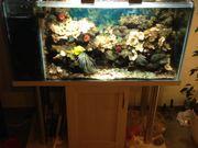 Salzwasseraquarium Meerwasseraquarium mit Zubehör