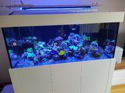 Meerwasser Aquarium Inhalt Auflösung