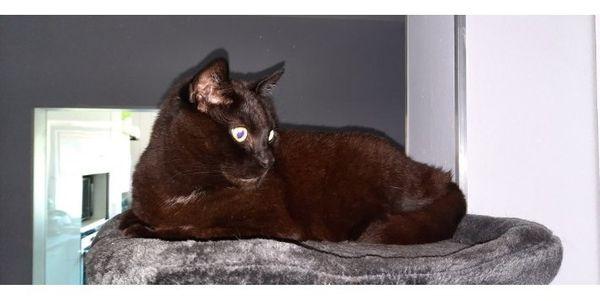 Katzen WG sucht liebevolles zu