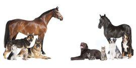 Bild 4 - Tiersitter Pferd Hund Katzen Nagetiere - Höchst