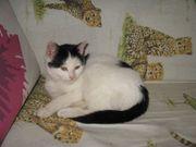 Kitten 4-7 Monate - Tierschutz suchen