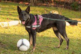 DRINGEND Lale 2 Jahre - Mischling -: Kleinanzeigen aus Lauf - Rubrik Hunde