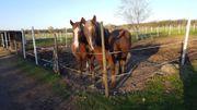 2 Pferdestellplätze ab sofort frei