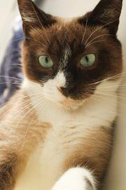 FIV-positve Katze Ivy sucht ein