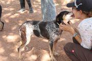 Aloha aufgeschlossene ältere Hundedame sucht
