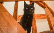 Vivian 10 Jahre - Katzendame im