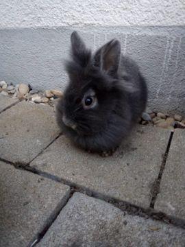 Futterraufe Heuraufe für Kaninchen Hasen Hase verzinkt 25cm
