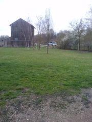 Wiese in Waldsee