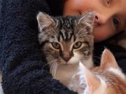 1 jähriger kater vermisst