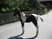 Pferd teilen