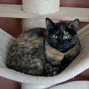 Pika - wunderschönes Katzenmädel sucht nach
