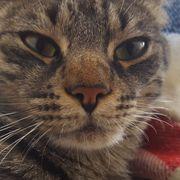 Kater vermisst Tomcat missed