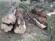 Baum-Kontrolle Baum-Gutachten Verkehrssicherheitsgutachten