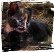 Baby Katze Saphira sucht ihr