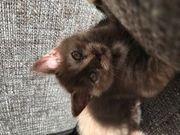5 Süße Kätzchen suchen ihr