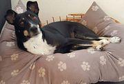 Tierschutzhund Charly sucht Körbchen