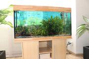 Aquarium 100x40x50 komplett mit Schrank