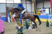 Pferd Wallach