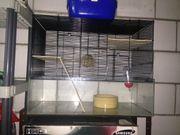 Kleintierkäfig mit Transportbox