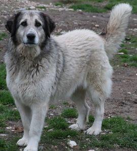Hunde - Aggy geb 06 2015 lebt