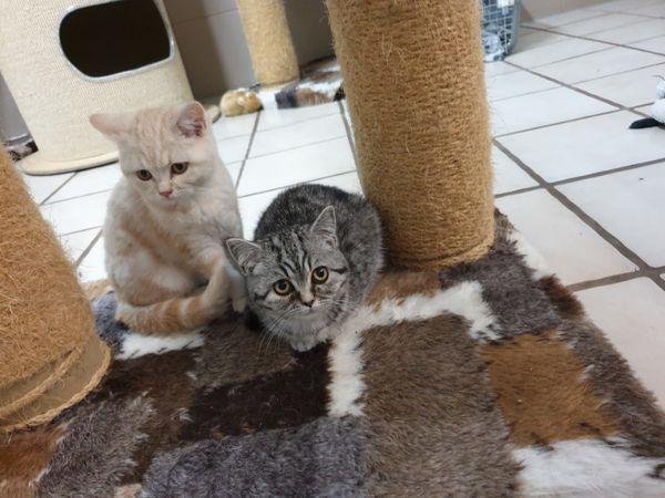 Zuckersüße Kitten suchen ein liebevolles
