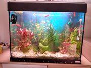 Aquarium 80 Liter