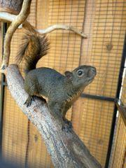 Hörnchen abzugeben
