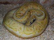 1 1 Banana Pastel Pinstripe