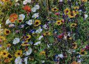 Blumenwiesen anlegen