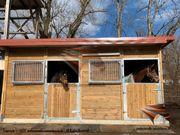 Außenboxen Pferdeställe Pferdeboxen Weidehütte Offenställe