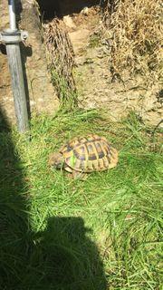 Schildkröte entlaufen
