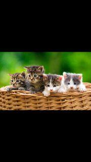 Katzenbabys gesucht !!!
