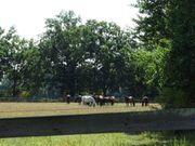 Pferde-Hofanlage Stalltrakt mit viel Weide