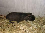 Skinny Pig Bock