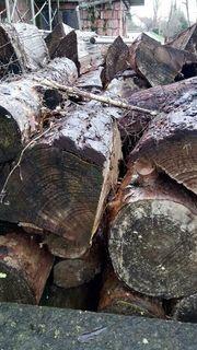 Föhre Holz