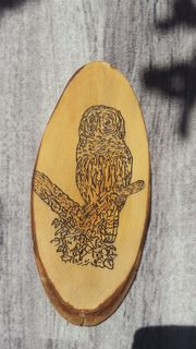 Holzrinden Schild mit Eule
