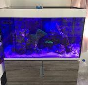 Meerwasser Aquarium Eheim