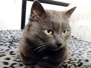 Katze Gracy Pflegestelle in 68723