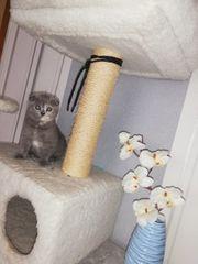 2 Kitten suchen treue Hände