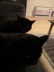 Verschenke Katzen