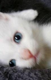 Suche verwaiste Kätzchen
