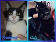 Zauberhafte Geschwister Cole u Prudence