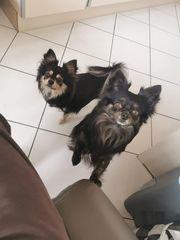 Koda und Mikolaj suchen ein