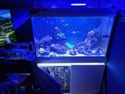 Meerwasser Aquarium Incpiria 330L