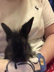 Baby Kaninchen