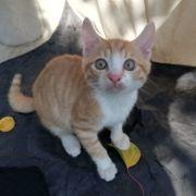Katzenjunge Kasimir möchte Dein Herz
