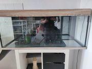 Juwel Rio 240 Aquarium mit