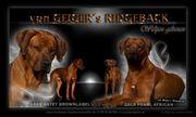 Rhodesian Ridgeback von Geiger s