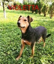 Violetta- Schmusepartner gesucht